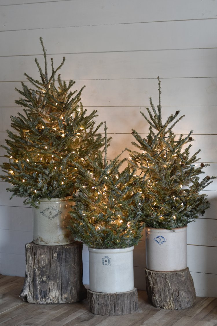 rocky hedge farm - Christmas Tree Without Decorations